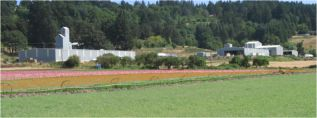 Triangle Farms, Evans Valley, Silverton Oregon
