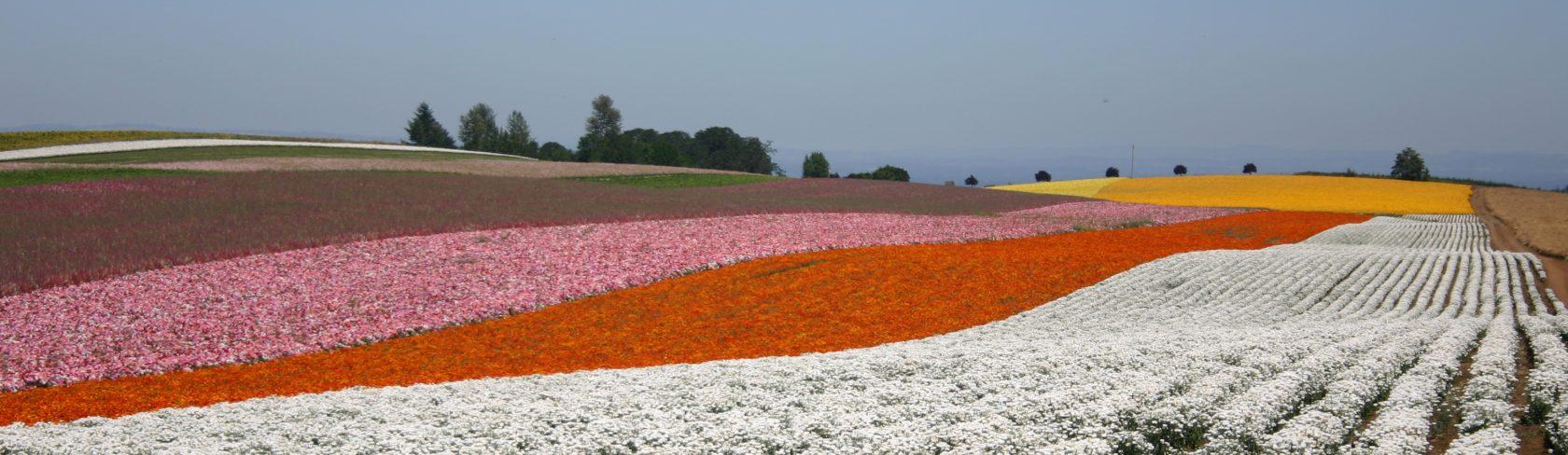Flowers Verrier