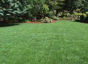 Grass Seed Mixes and Blends